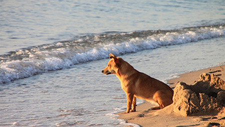American dogs have Asian DNA | Pet News | Scoop.it
