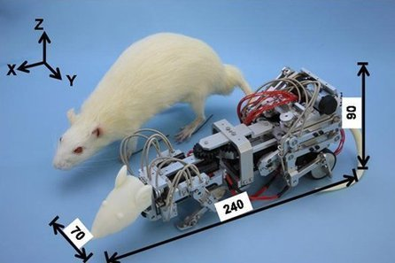 How Do You Depress A Rat? Harass It With A Robot | Interesting times. | Scoop.it
