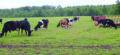 Dairy Day highlights organic farm - Superior Telegram | The Barley Mow | Scoop.it