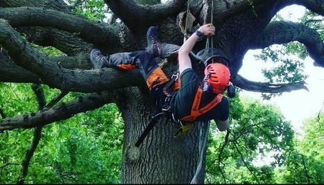 Selecting an Emergency Tree Rescue Services