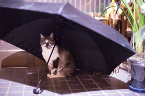 The Brolly, The Gamp, The Bumbershoot | catnipoflife | Scoop.it