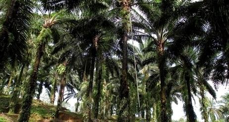 Vivre un an sans huile de palme, le bilan | Bio alimentation | Scoop.it