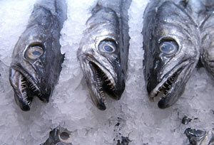Farm-raised or Wild Fish: What's the Difference? | Water Stewardship | Scoop.it