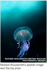 Image of Jellyfish captures award | Everything Photographic | Scoop.it