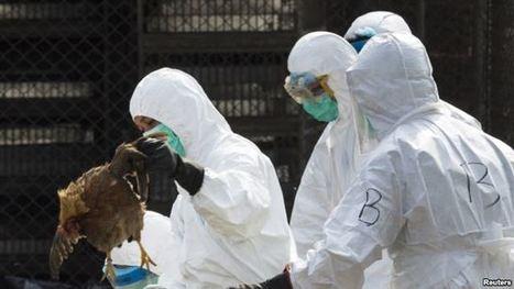 Flu Virus in China Has Pandemic Potential, Scientists Say | Virology News | Scoop.it