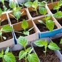 La permaculture, bien plus que du jardinage   Chuchoteuse d'Alternatives   Scoop.it