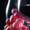 Abruzzo di Vino