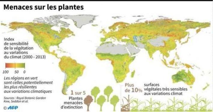 Un cinquième des plantes sont menacées, selon un nouveau baromètre (infographie) | Bois, forêt, construction, bois énergie, ameublement et plus | Scoop.it