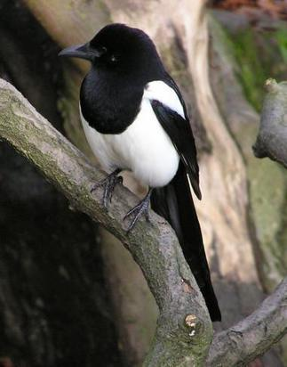 Is This The Most Intelligent Bird On the Planet ? | FrenchNewsOnline | French News Headlines | Scoop.it