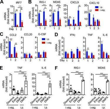 Dampened antiviral immunity to intravaginal exposure to RNA viral pathogens allows enhanced viral replication | Host Cell & Pathogen Interactions | Scoop.it