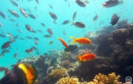 Dive in: Embark on a virtual exploration of the world's coral reefs | STEM Connections | Scoop.it