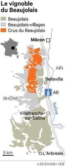 En pleine crise, les producteurs de beaujolais innovent sur le foncier   Autour du vin   Scoop.it