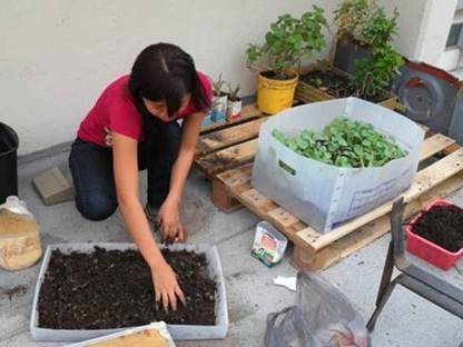 Promueven cultivo en azoteas para enfrentar crisis alimentaria   Cultivos Hidropónicos   Scoop.it
