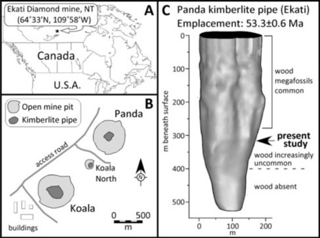 50-Million-Year-Old Redwood Chunk Found in NWT's Ekati Diamond Mine   NWT News   Scoop.it