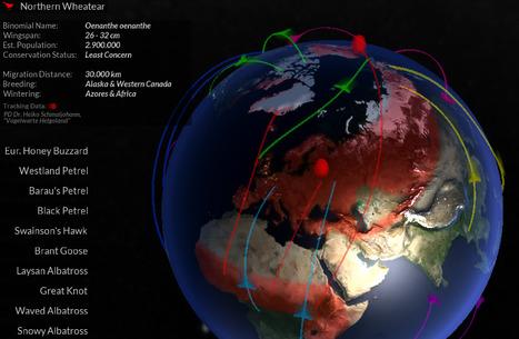 GLOBE INTERACTIF. Suivre et visualiser la migration des oiseaux | En vrac | Scoop.it