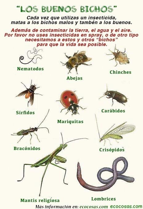 Los buenos bichos | Ecocosas | Bichos en Clase | Scoop.it