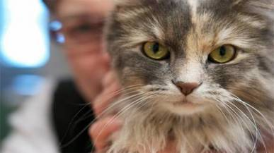 Why do kittens have vertical pupils? - Daily Times | Cats Rule the World | Scoop.it