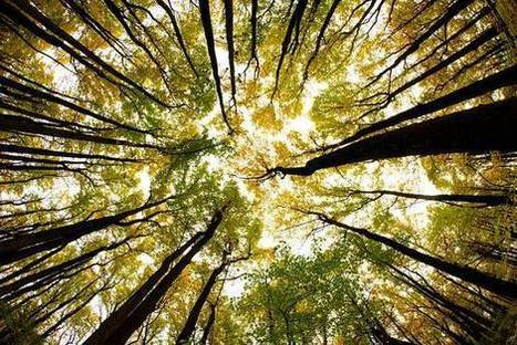Weyerhaeuser' in Timberland Investment   Scoop it