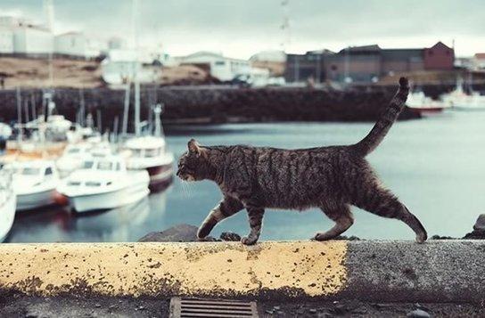 Comment voyager avec son chien ou son chat?