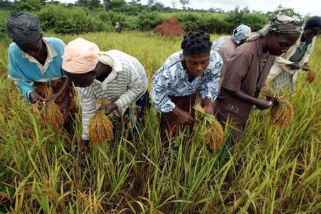 Pour une exception agri-culturelle dans le commerce mondial | Questions de développement ... | Scoop.it
