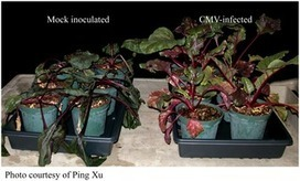 PLOS Pathogens: Plant Virus Ecology | Virology News | Scoop.it