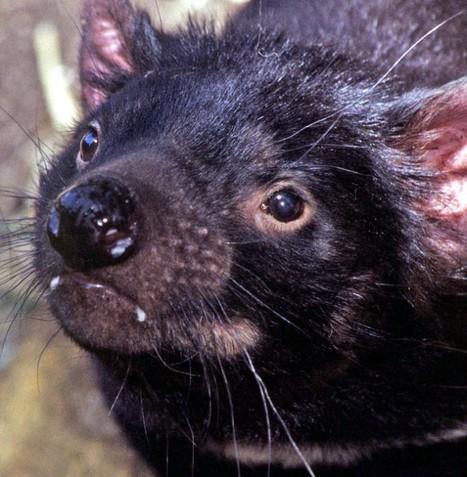 Une espèce qu'on croyait disparue depuis 30 ans aurait survécu | Merveilles - Marvels | Scoop.it