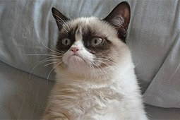 Grumpy Cat - Seen everywhere | The Funniest Cats In The World! | Scoop.it