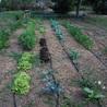 Horticulture i Horticultura natural
