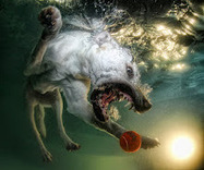 Diving Dogs Are Good Catch for Photographer | Raw File | Wired.com | All Informations | Scoop.it