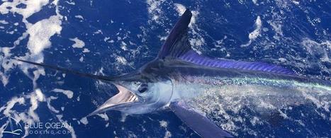 Fishing in the Virgin Islands | Blue Ocean Booking | Fisheries & Fishing Technology | Scoop.it