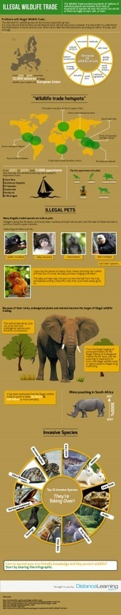 Distance Learning Publishes Infograph of Illegal Wildlife Trade | Wildlife Trafficking: Who Does it? Allows it? | Scoop.it