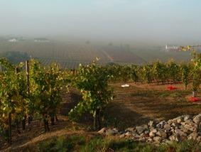 Une exploitation viticole sur quatre n'a pas de repreneur - Vitisphere.com | Agriculture en Gironde | Scoop.it