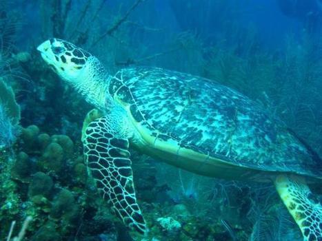 Top 5 Lesser-Known Dive Sites in Belize | Belize in Social Media | Scoop.it