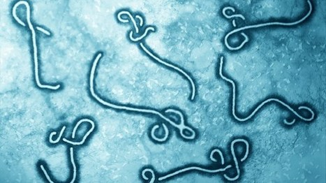Why Some Patients Resist Ebola Infection on Their Own | Virology News | Scoop.it