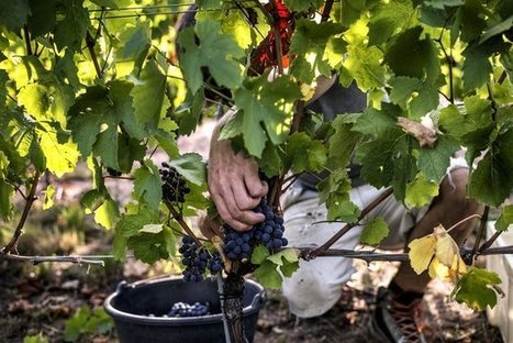 Climate Change May Change The Global Wine Map | In The Vineyard | Scoop.it