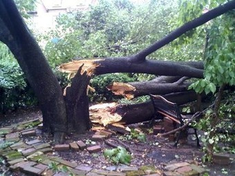 6 First Aid Tips to Help Trees After a Storm | Sustainable Futures | Scoop.it