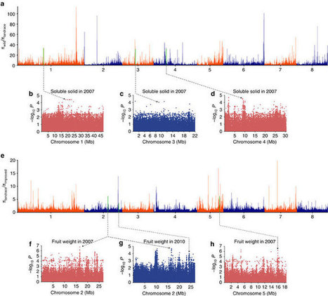 Genome-wide association study of 12 agronomic traits in peach | my universe | Scoop.it