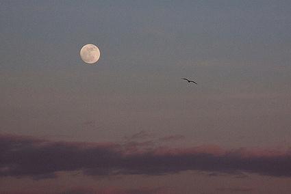Destination Lune | Ca m'interpelle... | Scoop.it