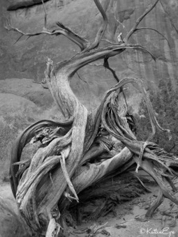 Backcountry Katlin: Wild Weekly Photo Challenge – Black and White | black and white film photo | Scoop.it