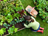 Why Gardening Is Good for Your Health - MSN Health - Health Topics | Gardening Life | Scoop.it