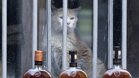 Behind Every Good Whisky Is A Trusty Distillery Cat | Pet Sitter Picks | Scoop.it