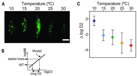 Phytochrome B integrates light and temperature signals in Arabidopsis | plant cell genetics | Scoop.it