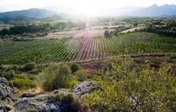 Belle sorprese. Il Cannonau di Pusole, per esempio | Wine in Tuscany | Scoop.it