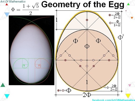 A53 Mathematics : The relation between the Egg and the Golden Ratio | Multi Cultural Mathematics education | Scoop.it