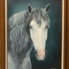 Horses and Equine Related Info