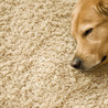 Carpet cleaning portsmouth