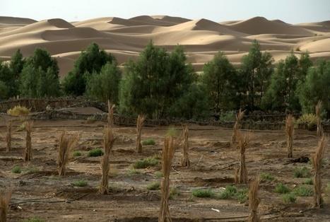 Au Maroc, les oasis toujours plus menacées par l'avancée du désert | Les déserts dans le monde | Scoop.it
