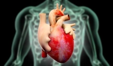 Generating hope through heart cell regeneration - Euro Weekly News   Ajan Reginald   Scoop.it