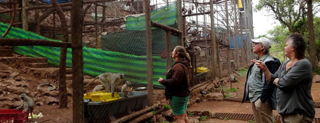 Another two vervet monkey troops ready for freedom | Wildlife Conservation: People and Stories | Scoop.it