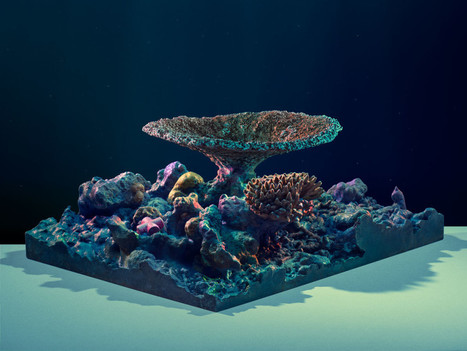 3-D Mapping the World's Corals to Track Their Health | 3D Printing and Innovative Technology | Scoop.it